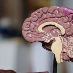 H&W; De gevolgen van hersenletsel – Feb 2020